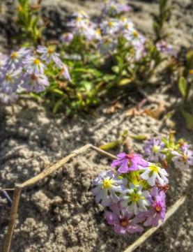 steenbok-flower-trail23