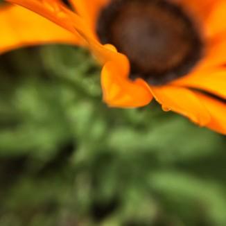 steenbok-flower-trail7